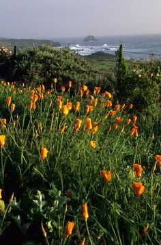 Big Sur, California - photographer, Eric Foltz