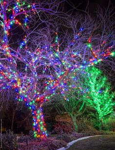 This guide helps you determine how many lights are needed for wrapping outdoor and indoor Christmas trees!