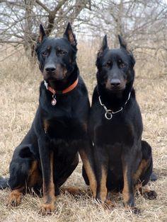 rare dog breeds | Doggerel