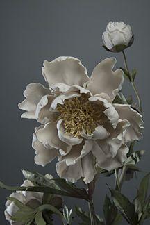 Porcelain Flowers by Vladimir Kanevsky Pasta Flexible, Succulents, Sculptures, Porcelain, Clay, Floral, Flowers, Plants, Art Ideas