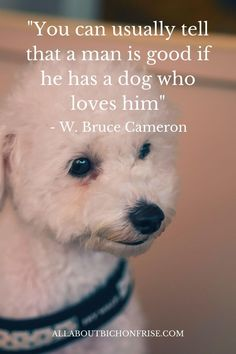 Our dogs are our best friends in the world without a doubt. Show your love and appreciation for these adorable doggos with these 21 inspiring dog quotes. Dog Quotes Inspirational, Mans Best Friend, Best Friends, John Grogan, Man And Dog, Happy Words, Little Puppies, Bichon Frise, Best Friend Quotes