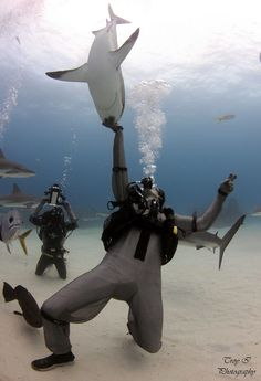 Shark Whispering in the Grand Bahamas