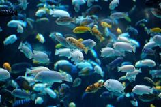 11 Best 55 Gallon Fish Tanks, Aquariums and Kits Comparison for 2016