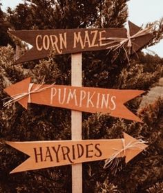 Theme Halloween, Halloween Season, Fall Halloween, Fall Pictures, Fall Photos, Autumn Cozy, Fall Wallpaper, Halloween Wallpaper, Happy Fall Y'all