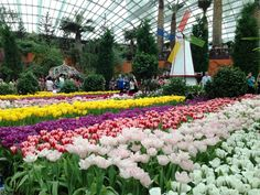 Garden By The Bay Flower Dome how to spend the perfect weekend in singapore | singapore, gardens