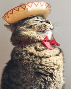 Cinco de mayo cat complete with bow tie and tiny sombrero | The Secret Life of…