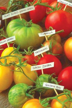 13 Top Tasty Heirloom Tomatoes