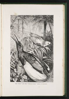 Alfred Russel Wallace – Scientist of the Day Alfred Russel Wallace, a British naturalist, was born Jan. 8, 1823. read more…