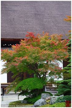 Chion-in (知恩院) is a major temple in Kyoto and boosts the largest gate in Japan and has more than one garden.  The Hojo Garden is in the chisen kaiyushiki (garden which is designed around a pond) style. The garden exudes the moods of the four seasons. It is said to have been designed in the early Edo (1600-1868) period by the monk Gyokuen, who was connected to garden master Kobori Enshu. The garden includes the Shinji-ike (Heart Character) Pond, the Aoi-an Teahouse, and the Tokugawa Gongendo…