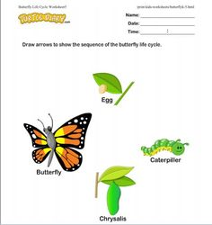 Life Cycle of a Butterfly. Free Worksheets and video lesson!