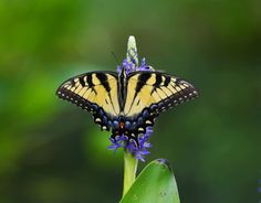 Butterfly Element by Aric Jaye on 500px