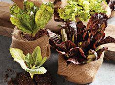 Planning a Kitchen Garden   Williams-Sonoma