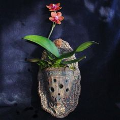 Orchid Wall Planter, ornately display your finest beauty | LastChantsStudio - Ceramics & Pottery on ArtFire