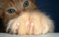 Do czego kotu potrzebne są pazury?