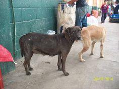 $20 Fix Campaign in Guatemala - No More Stray Animals
