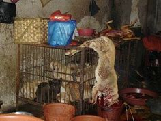 PETITION - Sanction S. Korea for dog meat trade cruelty.Dead dogs are left on the cages containing the dogs that are waiting to be slaughtered - they must be absolutely terrified. John Kim, Animals Information, Dead Dog, Stop Animal Cruelty, Dog Eating, Animal Welfare, Animal Rescue, Animal Testing, Animal Rights