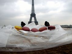 In Paris, even the Pigeons love macarons! by Canon S3 IS in Paris, France, via Flickr