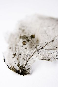 Forgotten leaf ll by koinis on Flickr