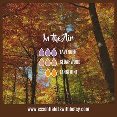 October Breeze Fall Diffuser Blend: Cedarwood, Clove, Juniper, Orange Here are no less than FIFTY-SIX fall essential oil diffuser blends for your enjoyment. Something sure smells good! With BONUS 16 page e-Book! Fall Essential Oils, Essential Oil Diffuser Blends, Essential Oil Uses, Juniper Essential Oil, Tangerine Essential Oil, Elixir Floral, Diffuser Recipes, Aromatherapy Oils, Belleza Natural