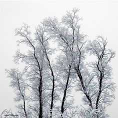 by Andre Villeneuve - Pixdaus Winter Trees, Natural Beauty, Asian Dating, Awesome, Snowflakes, Artwork, Nature, Naked, Boobs