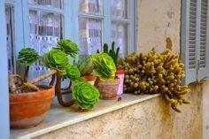 #Lenticchie: il #rimedio naturale per #piante morenti