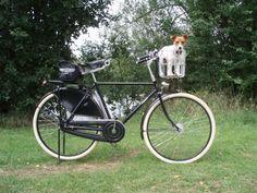 pashley + brooks + dog!