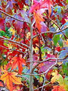 new artwork to fineartamerica.com! - 'It Is Autumn And The Tree Is Colored Maple' - http://fineartamerica.com/featured/it-is-autumn-and-the-tree-is-colored-maple-mariateresa-sala-picture-naif-gallery.html via @fineartamerica