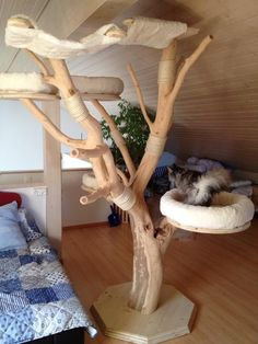 MAINE COON World - Naturkratzbäume You are in the right place about Cat playground outdoor diy Here Cat Playground, Playground Design, Diy Cat Tree, Pocket Pet, Outdoor Cats, Outdoor Play, Maine Coon, Cat Room, Cat Condo