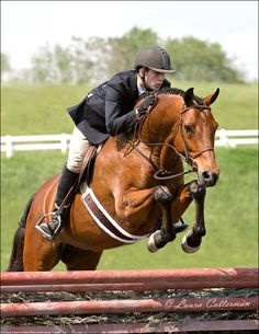 Equestrian+Jumping | Horse Sport is pleased to announce that it is accepting applications ...