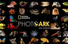 Photo Ark is a multiyear effort with Joel Sartore to photograph all captive species and inspire people to save these animals before they disappear forever.