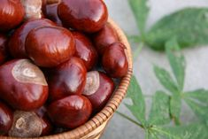 Sweet Chestnuts - Health Benefits, Nutritional Value and Medical Uses Parks, Sweet Chestnut, How I Lost Weight, Nutritional Value, Paleo Recipes Easy, Food Categories, Weight Loss Diet Plan, Sugar, Superfoods