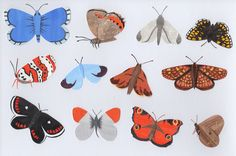 Butterflies. Stacey Knights Illustration