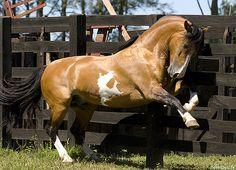 Explore Indio do Boeiro's photos on Flickr. Indio do Boeiro has uploaded 33…