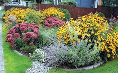 Awesome raingarden for water runoff control