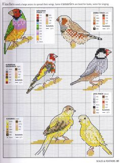 Finches and canaries - free cross stitch patterns Cross Stitch Needles, Cross Stitch Bird, Beaded Cross Stitch, Cross Stitch Animals, Cross Stitching, Cross Stitch Embroidery, Embroidery Patterns, Free Cross Stitch Charts, Counted Cross Stitch Patterns