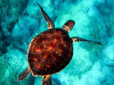 🦒 🐩 Voyager Avec Des Animaux 🐘 🦩 – Tsilemewa™ Turtle Facts, World Turtle Day, Turtle Images, Turtle Swimming, Turtle Dove, Paint By Number Kits, Saltwater Fishing, Reptiles, Tortoise