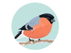 Winter Birds designed by Patricia Martinez . the global community for designers and creative professionals. Bird Design, Rooster, Christmas Cards, Greeting Cards, Birds, Monday Friday, Awesome, Winter, Illustration