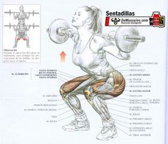 Anatomy of Working Muscles - Squats Killer Workouts, Toning Workouts, Fun Workouts, Training Legs, Weight Training, Coach Sportif, Back Squats, Muscle Anatomy, Leg Anatomy