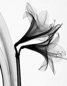 (101) Flowers Under X-Ray - design-dautore.com