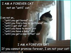 Cats Protection is the UK's leading cat charity. As a feline welfare charity, we help cats and kittens every year. Find out more about Cats Protection. Old Cats, Cats And Kittens, Crazy Cat Lady, Crazy Cats, Crazy Animals, Neko, Boy Cat, All About Cats, Getting Bored
