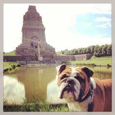 leipzig. völkerschlachtdenkmal. english bulldog.