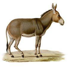 Like A Donkey - Palm Sunday - Diakonia Christian Church