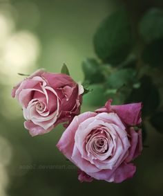 love this color rose