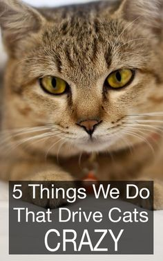 Most people do this without realizing it's turning their favorite feline against them. 5 well-intentioned things we do that drive cats crazy.