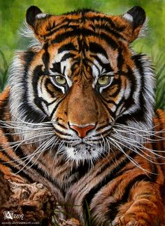 Sumatran tiger by Azany / Acrylic on canvas Tiger Artwork, Tiger Painting, Big Animals, Majestic Animals, Big Cats Art, Cat Art, Siberian Tiger, Bengal Tiger, Beautiful Cats