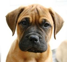 This is EXACTLY what our dog looked like when he was a puppy.