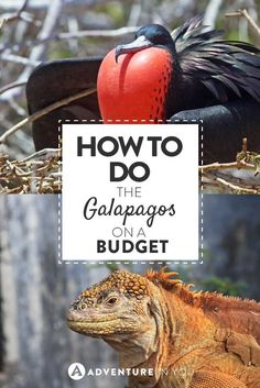 Galapagos on a Budget| Looking for ways on how to do the Galapagos on a budget? Here is a detailed guide on how to get it done cheaply!