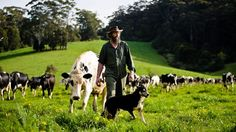 Farmer looking after the land and the animals
