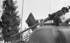 A rescued kitten on the turret of a Sherman tank, 14 August 1944.