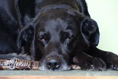 Narcoleptic Dogs - Strange but True